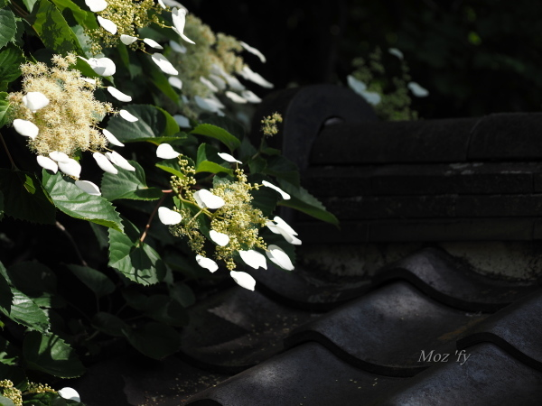 P6020119-12.jpg